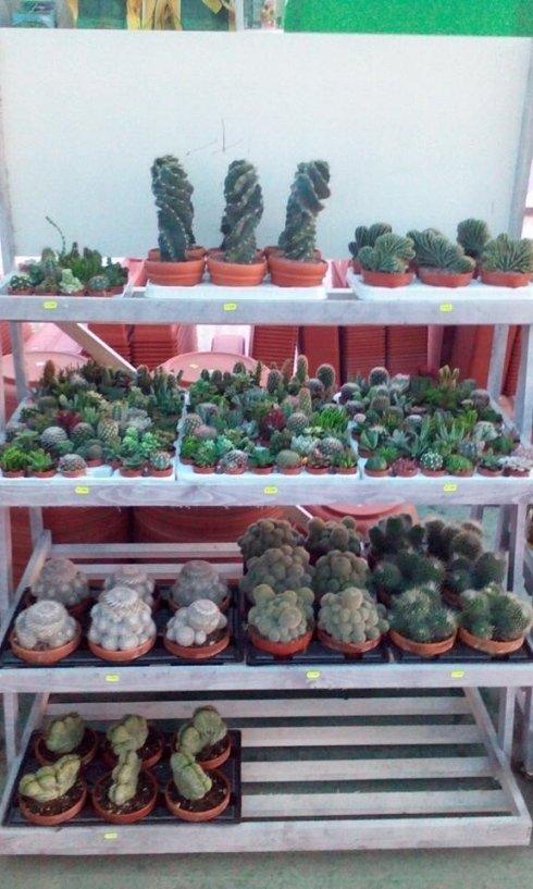 produzione piante napoli
