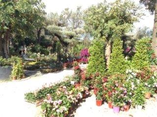 Produzione piante