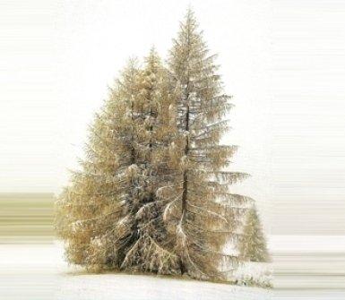 legno, albero, azienda del legno, tavolame, perlina legno, listoni abete