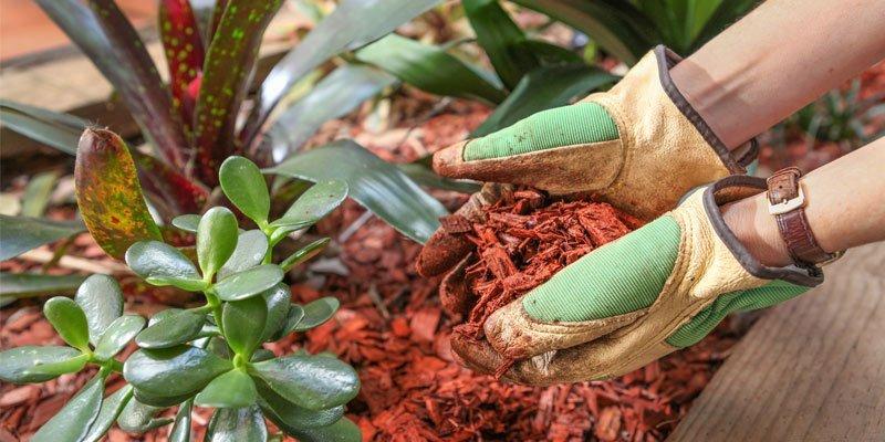 mercuri garden and building supplies red mulch in the garden