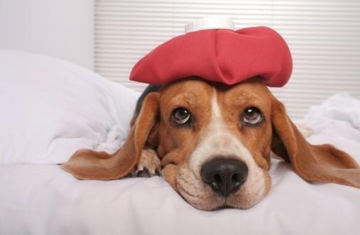 antibiotici cani e gatti