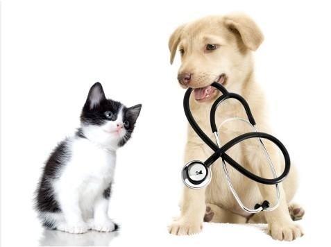 antipulci cani e gatti