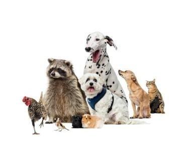 medicinali animali farmacia