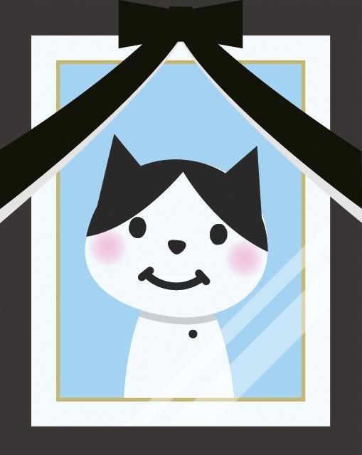 Funerali Per gatti, funerali per animali domestici, funerali per animali rieti