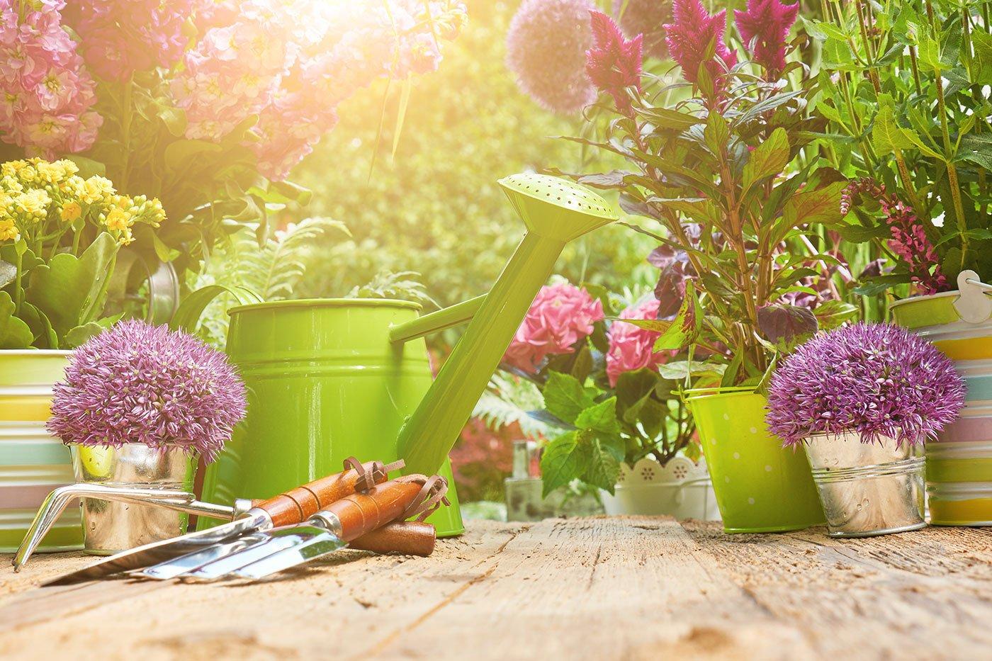 Piante, una pioggia verde e piccoli strumenti di giardinaggio