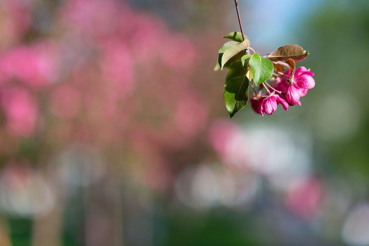 Primo piano di un fiore fucsia pendente