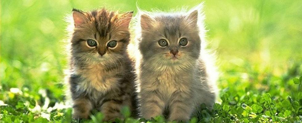cura gatti