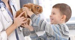 medicina piccoli animali
