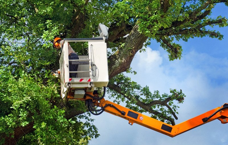 Tree specialist from Bechtel tree service