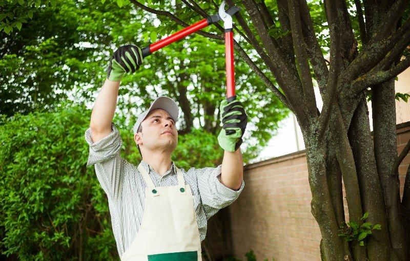 Pruning a tree in La Crosse
