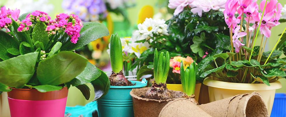 vendita piante in vaso