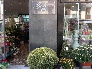 fiorista Pavia