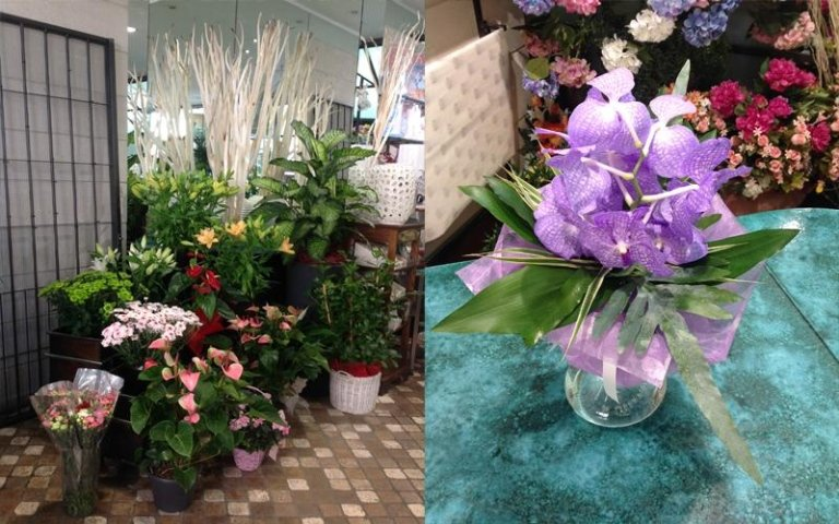 phaleonopsis lilla da arredo