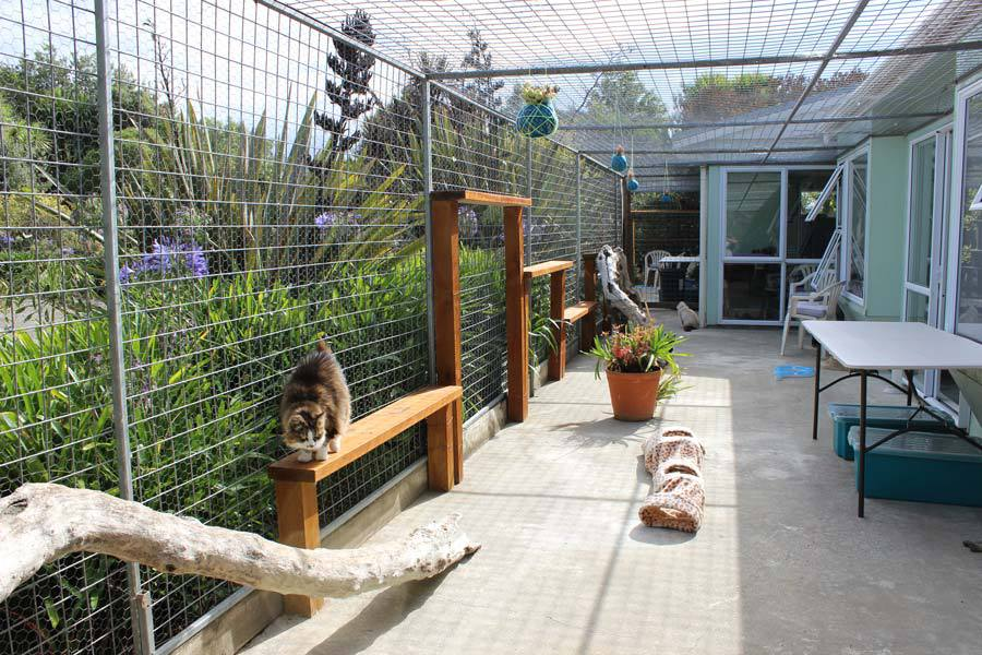 Cattery in Palmerston North NZ