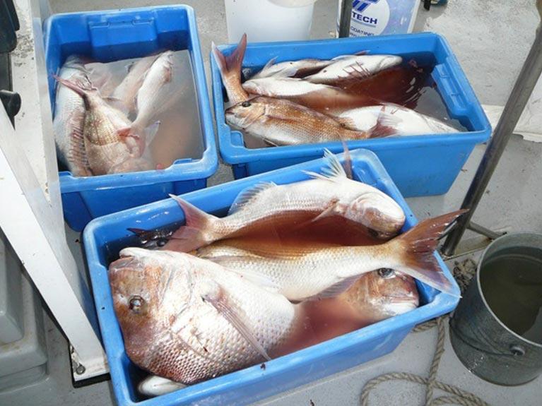buckets full of fish