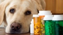 veterinaria, farmacia veterinaria, cure per animali