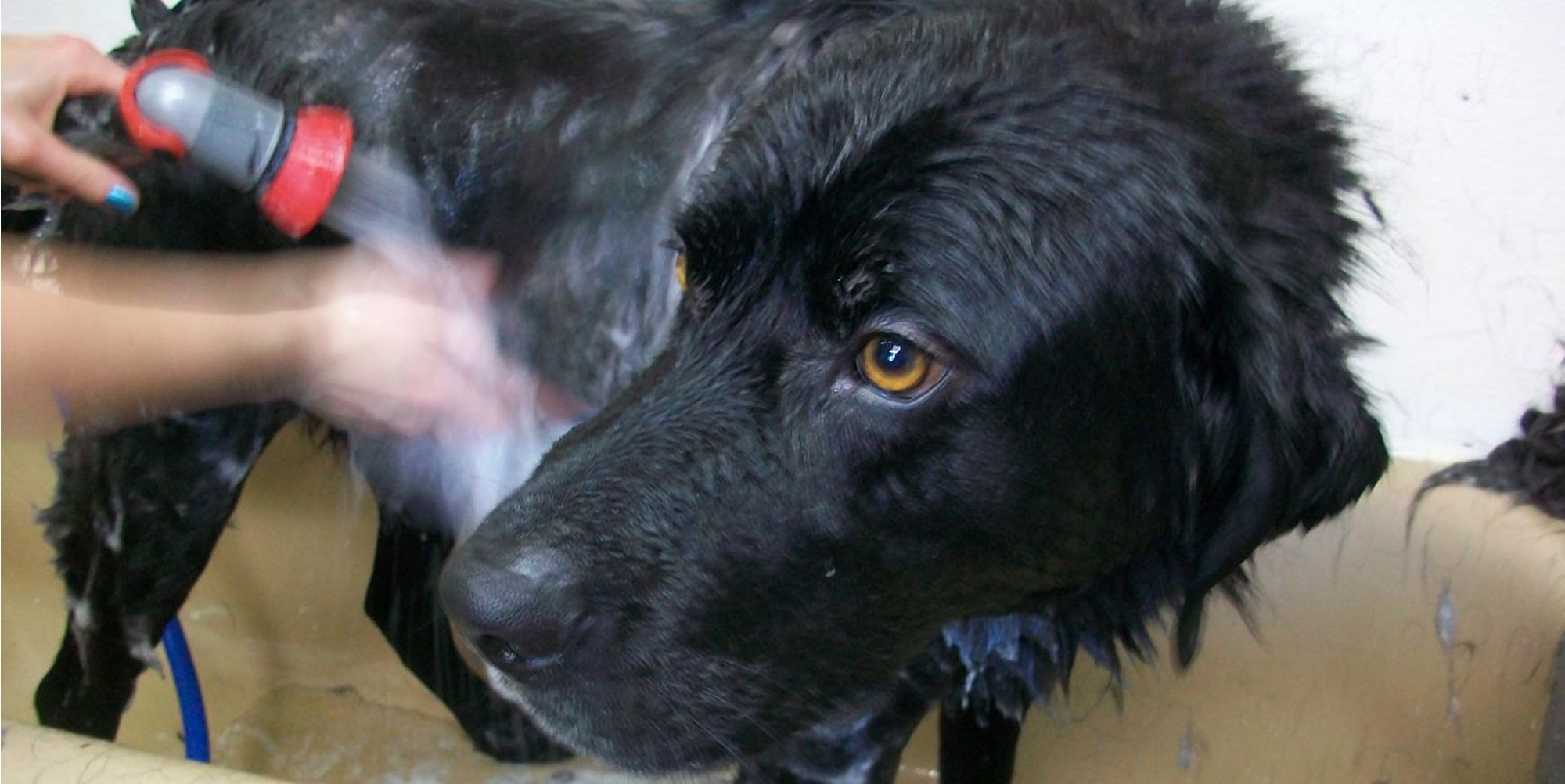 A dog receiving pet grooming services in Palmer, AK