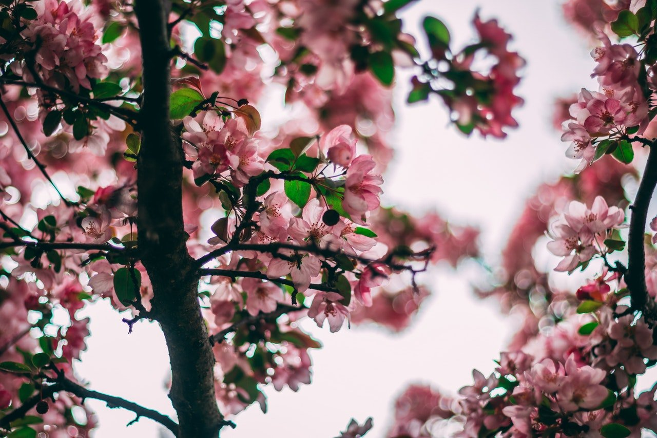 Ask An Arborist Can You Trim Trees In Spring
