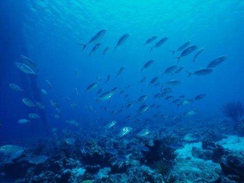 attività subacquea