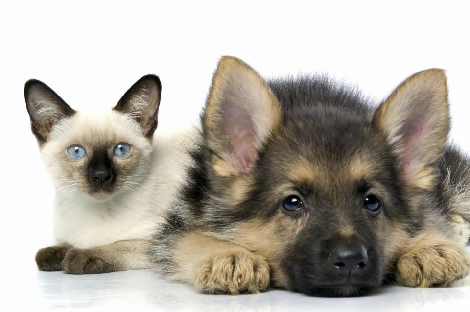 CONDROPROTETTORI cani e gatti