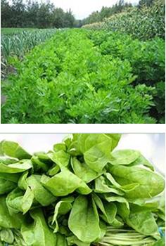 Sample of produce grown