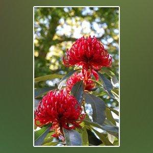 landscape gardener shoalhaven flowers red
