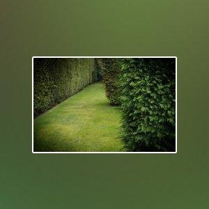 landscape gardener shoalhaven garden grass