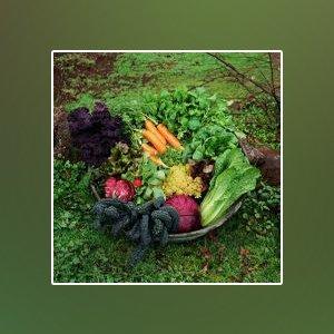 landscape gardener shoalhaven fruits basket
