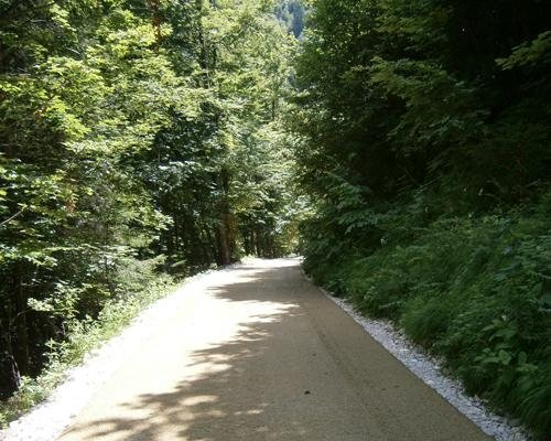 Viale bosco