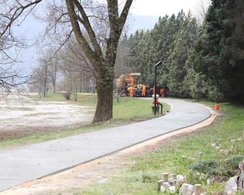 Strada parco con albero