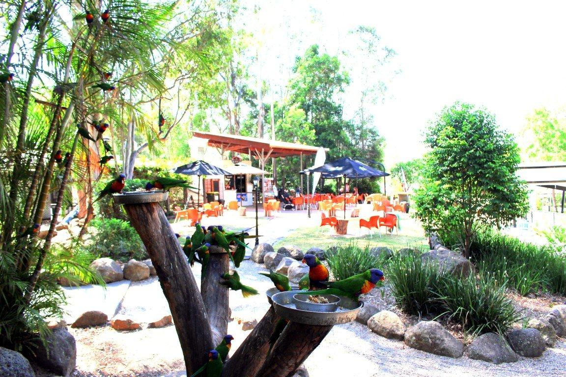 thunderbird park mt tamborine adventure park gold coast