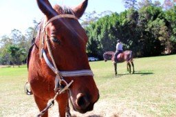 Horse Riding Hinterland