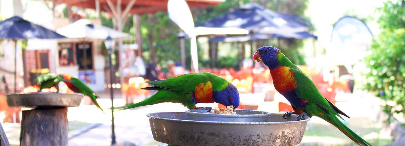 2pm Daily Bird Feeding