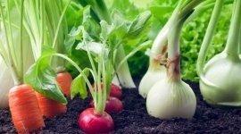 fertilizzanti per orticolutura