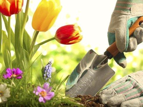 Davide Prola Realizzazione e Manutenzione Aree Verdi - manutenzione giardini