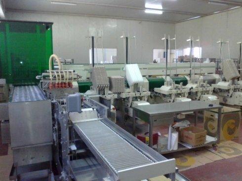 macchinario per la classificazione delle uova
