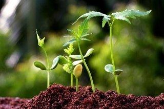 prodotti agricoltura