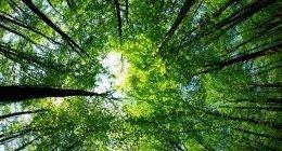 onsulenza forestale, sicurezza, indagini fitosanitarie