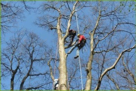 arrampicata alberi