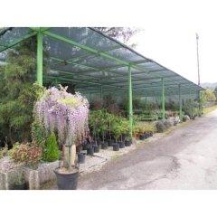 giardini, realizzazione giardini, giardinieri