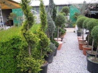 giardinieri, manutenzione giardini, impresa giardinieri