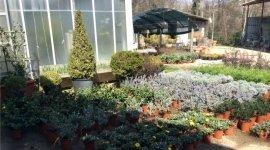 manutenzione verde pubblico, trattamenti piante, trattamenti antiparassitari piante