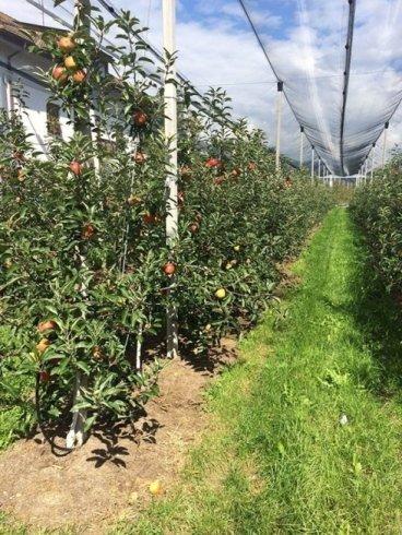 coltivazione diretta pomodori