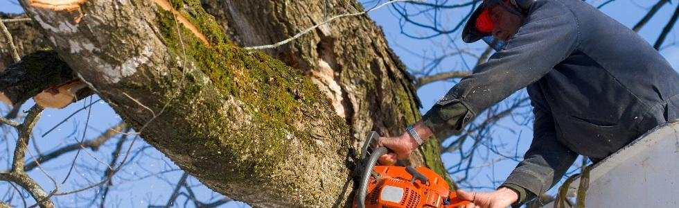 legna e potatura