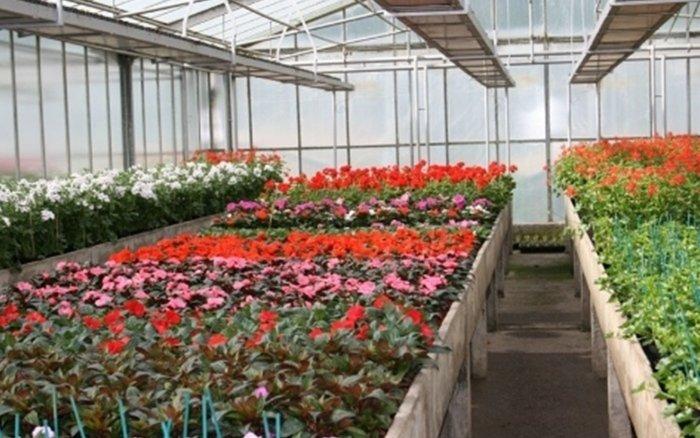 fiori e piante vivaio