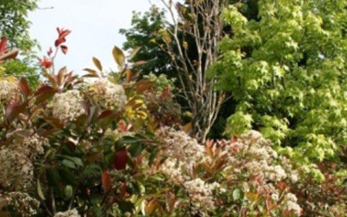 piante clusone