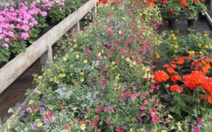 piante bergamo clusone