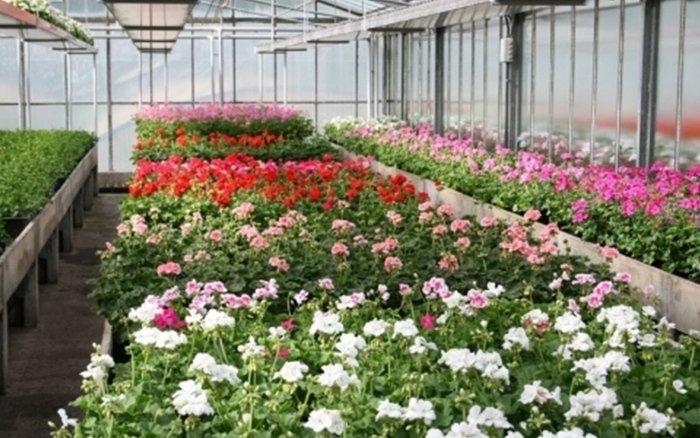 serra calegari fiori e piante