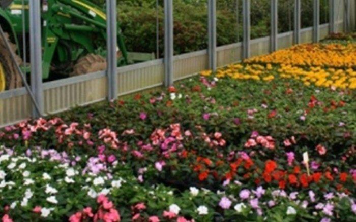 fiori e piante vivaio clusone