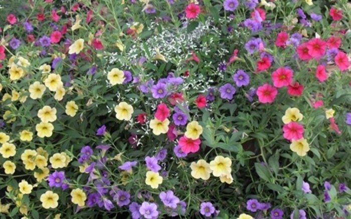vendita fiori e piante bergamo